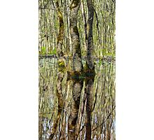 Forest in the swamp Photographic Print