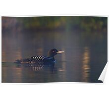 Common loon  Poster