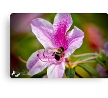 The Bee and the Flower Canvas Print