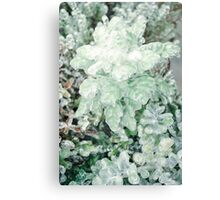 Green Plant Frozen Canvas Print