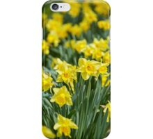 Daffodils field iPhone Case/Skin