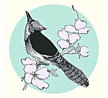 BLACK BIRD Photographic Print