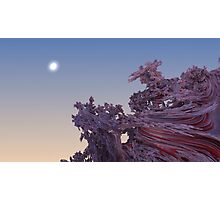 Raspberry Swirls Photographic Print