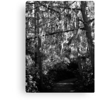 Spanish Moss in Trees Canvas Print