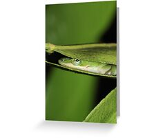 Silly Cute Cool Adorable Fun Sleepy Green Anole Lizard  Greeting Card