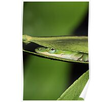 Silly Cute Cool Adorable Fun Sleepy Green Anole Lizard  Poster