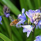 Bee & Bluebells by AnnDixon