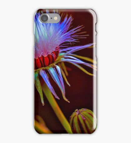 Photo Art, common groundsel seed head iPhone Case/Skin