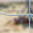 Wire Fence by Bo Insogna