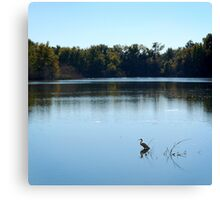 Snowy egret at Lake Alice Canvas Print