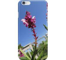 Salvia iPhone Case/Skin
