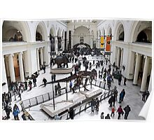 Field Museum Main Hall Poster