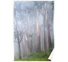 Ghostly Gum trees - Beechworth Poster