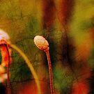 Floral metamorphosis by Vasile Stan