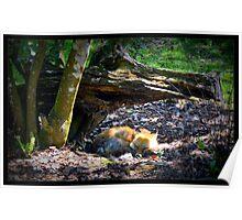 The Sleeping Fox Poster