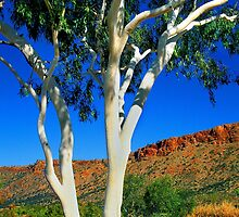 Ghost Gum - Alice Springs by Hans Kawitzki