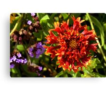 Beautiful colorful red flower in the garden. Canvas Print