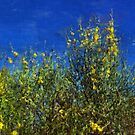 Broom Shrubs under Blue Sky by jean-louis bouzou