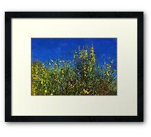 Broom Shrubs under Blue Sky Framed Print
