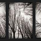 treeology in black&white by Dorit Fuhg