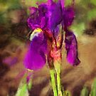Iris in a Garden by jean-louis bouzou