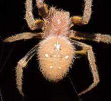 Orb-weaving spider in the Peruvian rainforest Sticker