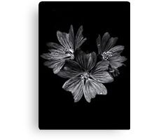 Backyard Flowers In Black And White 11 After The Storm Canvas Print