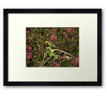 Sunflower Finch Framed Print
