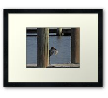 Black heron with crab Framed Print