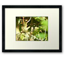 Humming bird in green Framed Print