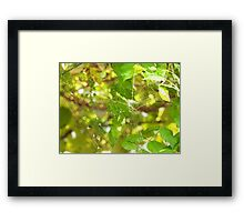 Green spiderweb Framed Print