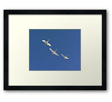 Flying Swans Framed Print