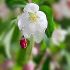 Crab Apple Flowers by Yannik Hay