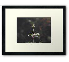 Bud Web Framed Print