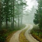 Woodland road by Mark Williams