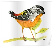 Spotted Pardalote - Colorful Bird Poster