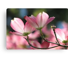 Pink Dogwood Spring Magic Canvas Print