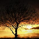 A single tree at sunset by missmoneypenny