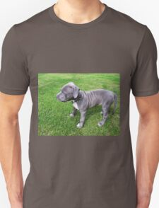 Gorgeous Baby, Blue Pit Bull Puppy Dog With Wrinkles Unisex T-Shirt