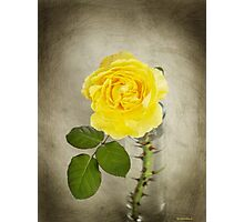 Single Yellow Rose with Thorns Photographic Print
