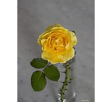 Single Yellow Rose with Blue Photographic Print