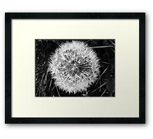 Dandelion head  Framed Print