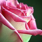Shimmering Elegance by Terri~Lynn Bealle