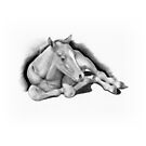 Long-legged Colt Lying Down, Pencil Drawing, Horse by Joyce Geleynse