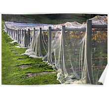 Vineyard nets Poster
