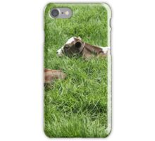 Two Calves in a Pasture iPhone Case/Skin