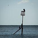 Cormorants on Sea Defence  by shane22