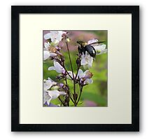 BUBBLE BEE Framed Print