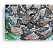Rat Snake Canvas Print