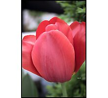 The Beauty Photographic Print